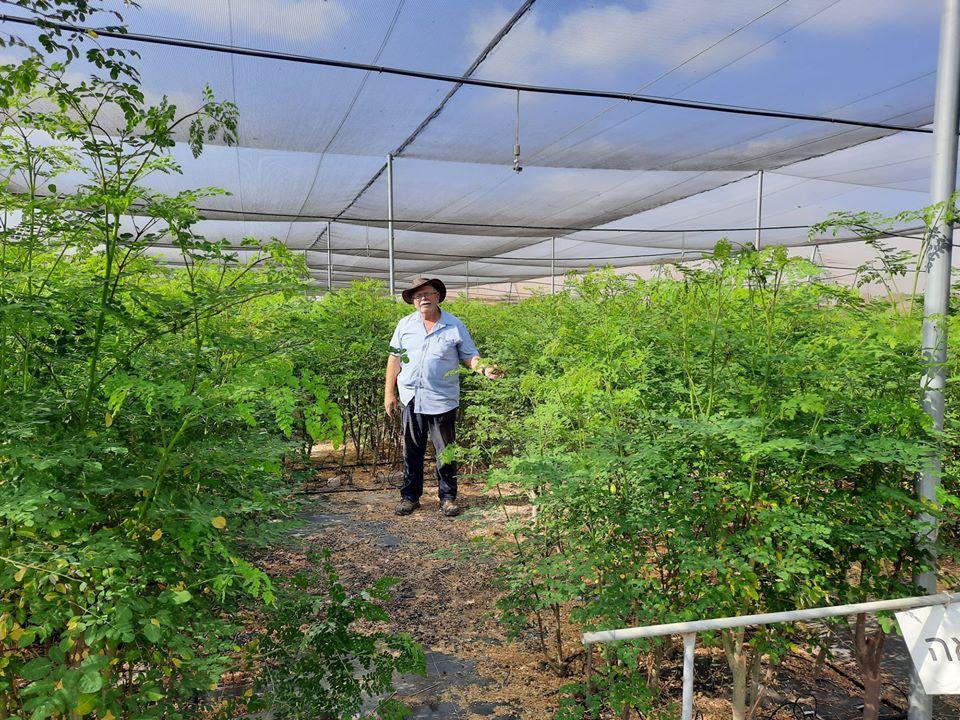 מוטי סנדר עומד באמצע יערות עצי המורינגה במשתלות סנדר