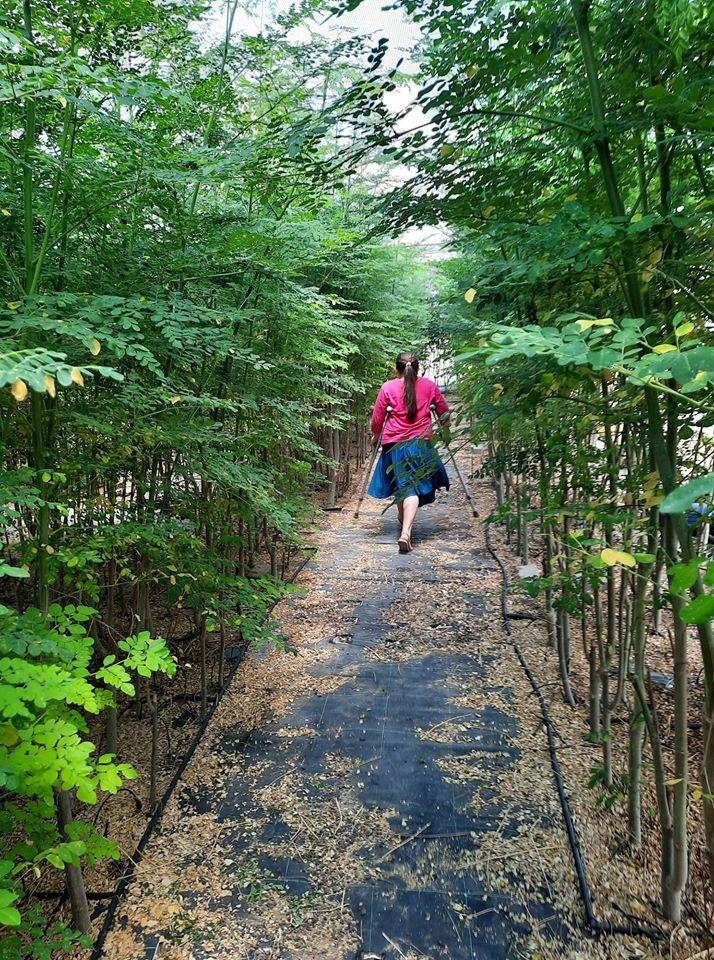 """ילדה נכה הולכת בשמחה בין עצי המורינגה של מבוך המורינגה ב-""""יערות מורינגה"""""""