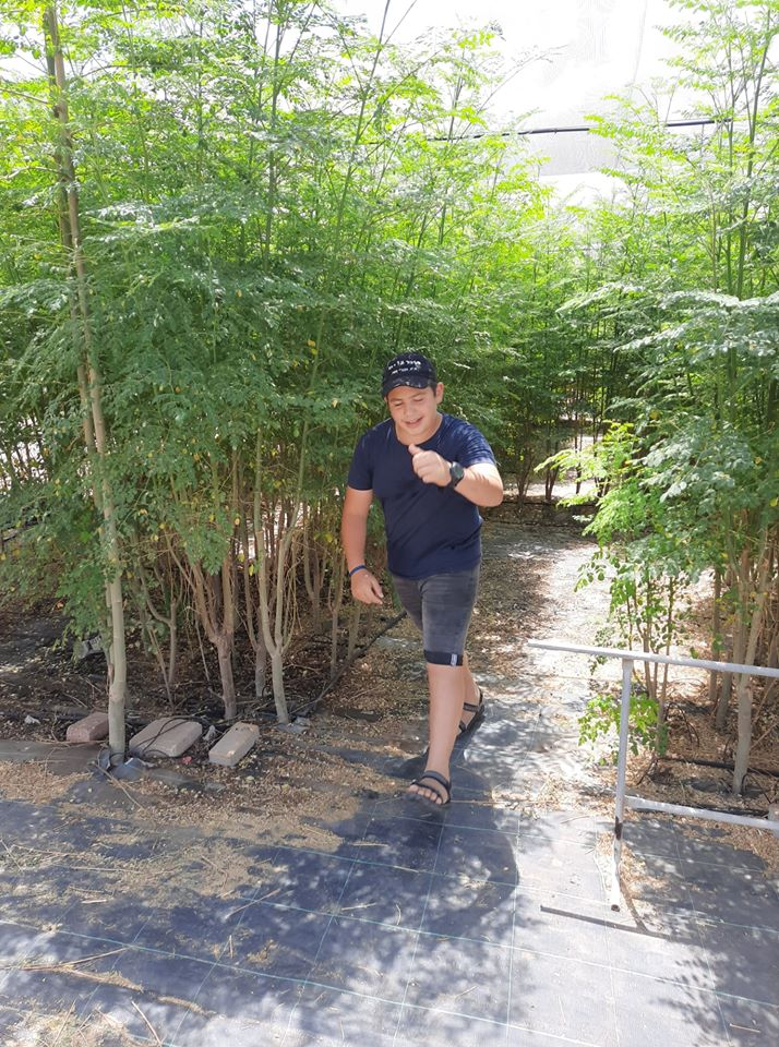ילד שמח יוצא בהצלחה בין עצי המורינגה של מבוך המורינגה ביערות מורינגה